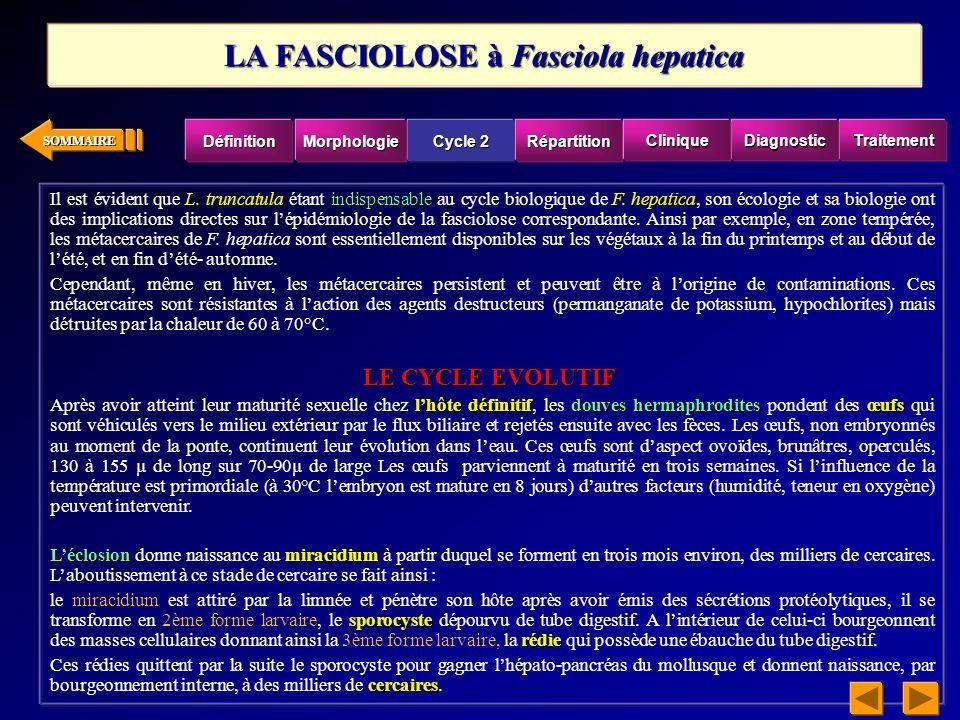 LA FASCIOLOSE à Fasciola hepatica