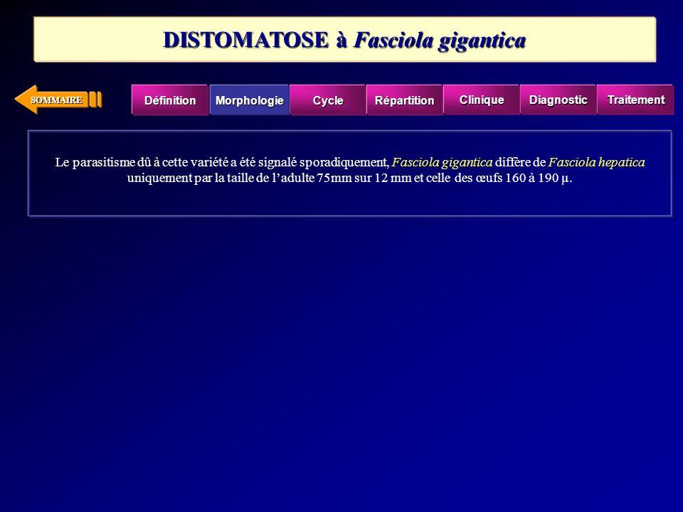 DISTOMATOSE à Fasciola gigantica
