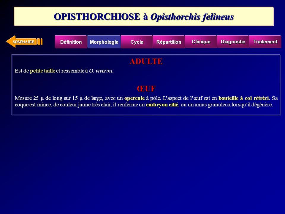 OPISTHORCHIOSE à Opisthorchis felineus