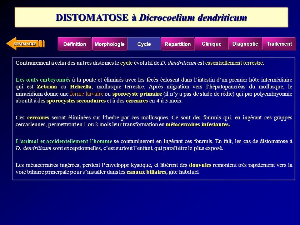 DISTOMATOSE à Dicrocoelium dendriticum