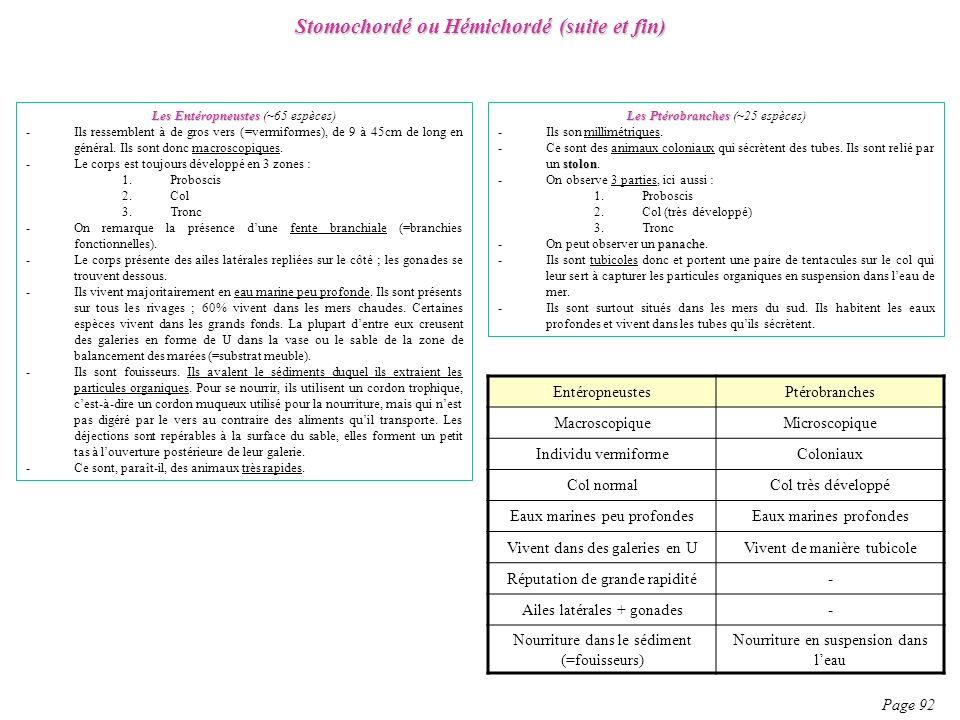 Stomochordé ou Hémichordé (suite et fin)