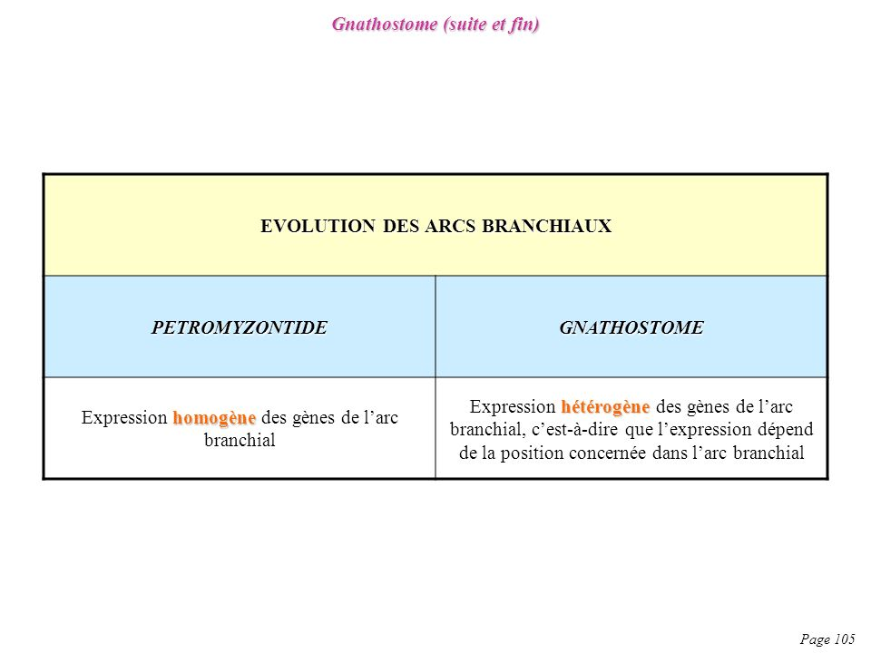 Gnathostome (suite et fin) EVOLUTION DES ARCS BRANCHIAUX