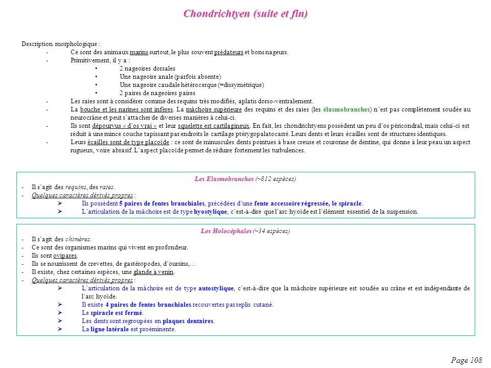 Chondrichtyen (suite et fin)