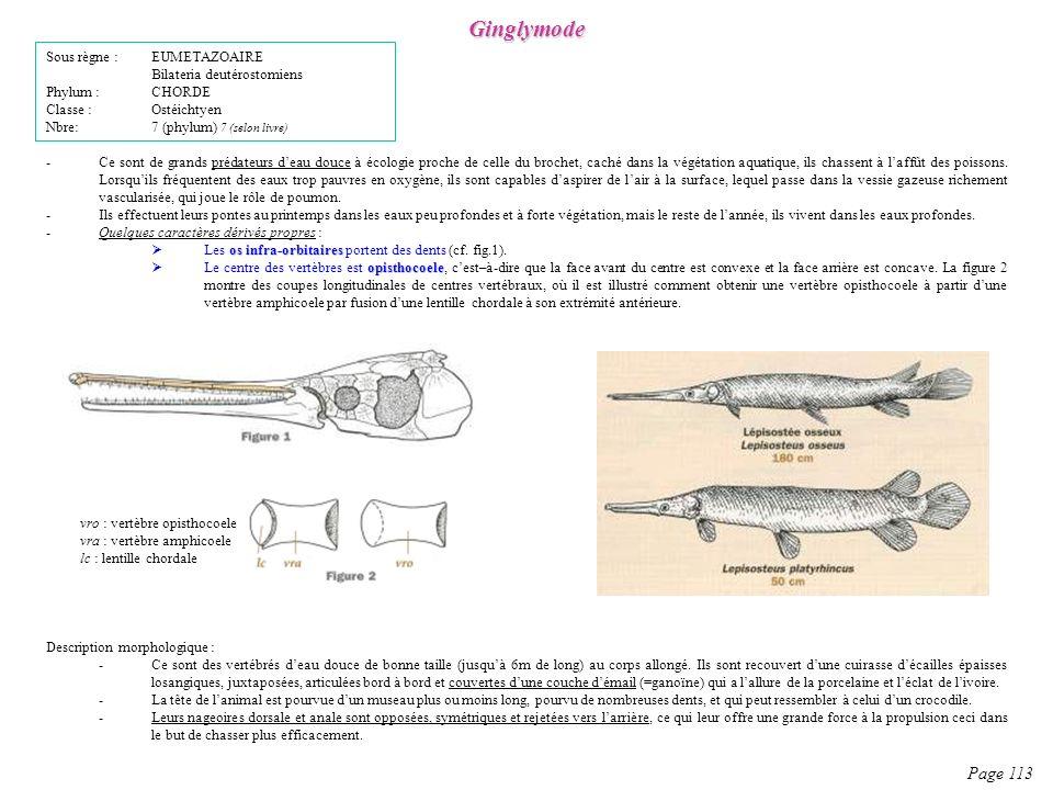 Ginglymode Page 113 Sous règne : EUMETAZOAIRE