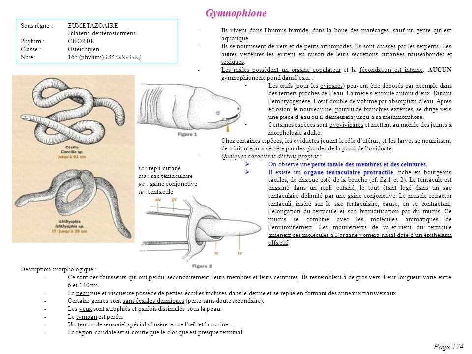 Gymnophione Page 124 Sous règne : EUMETAZOAIRE
