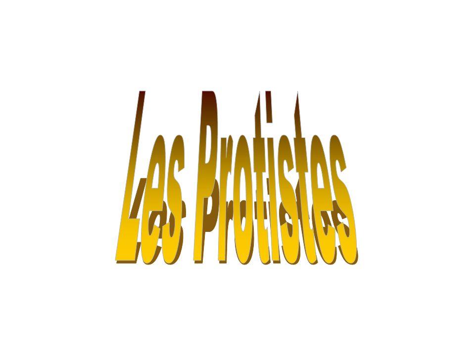 Les Protistes