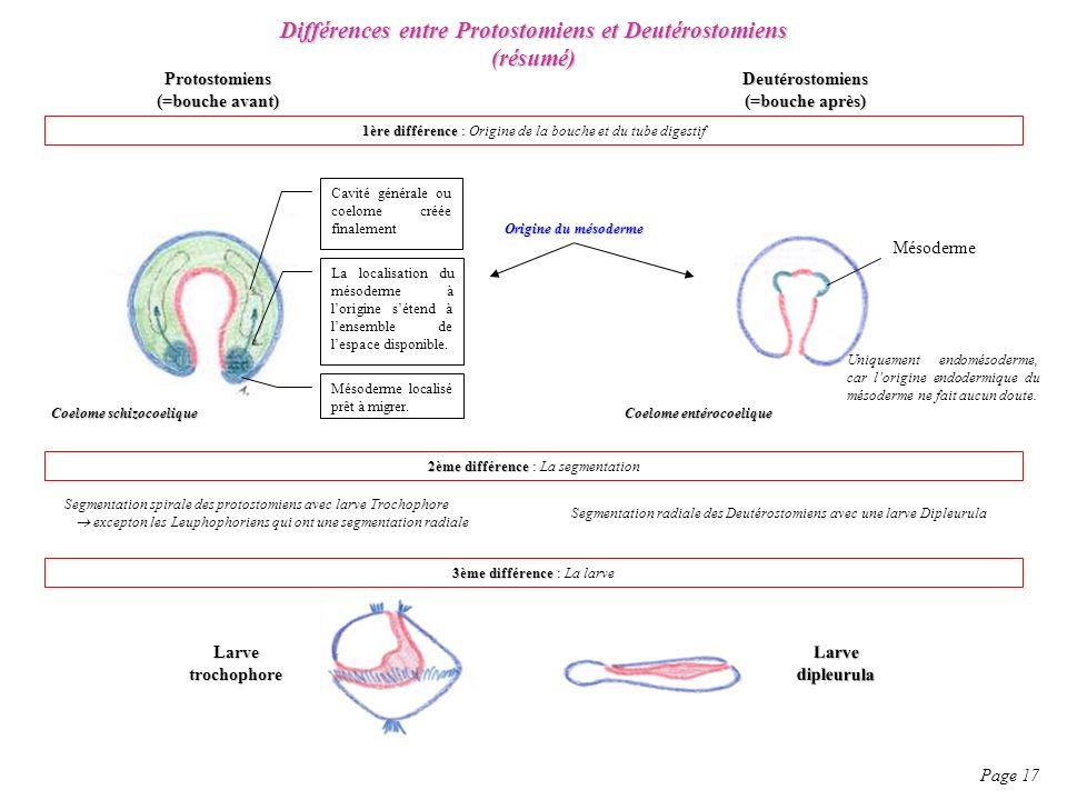 Différences entre Protostomiens et Deutérostomiens (résumé)