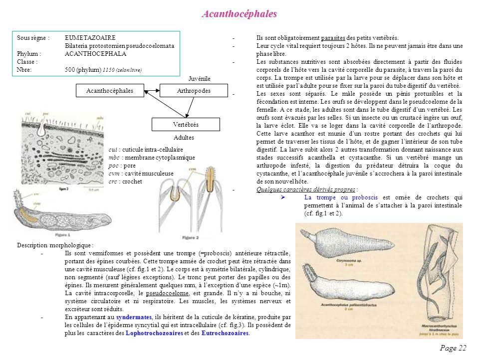 Acanthocéphales Page 22 Sous règne : EUMETAZOAIRE