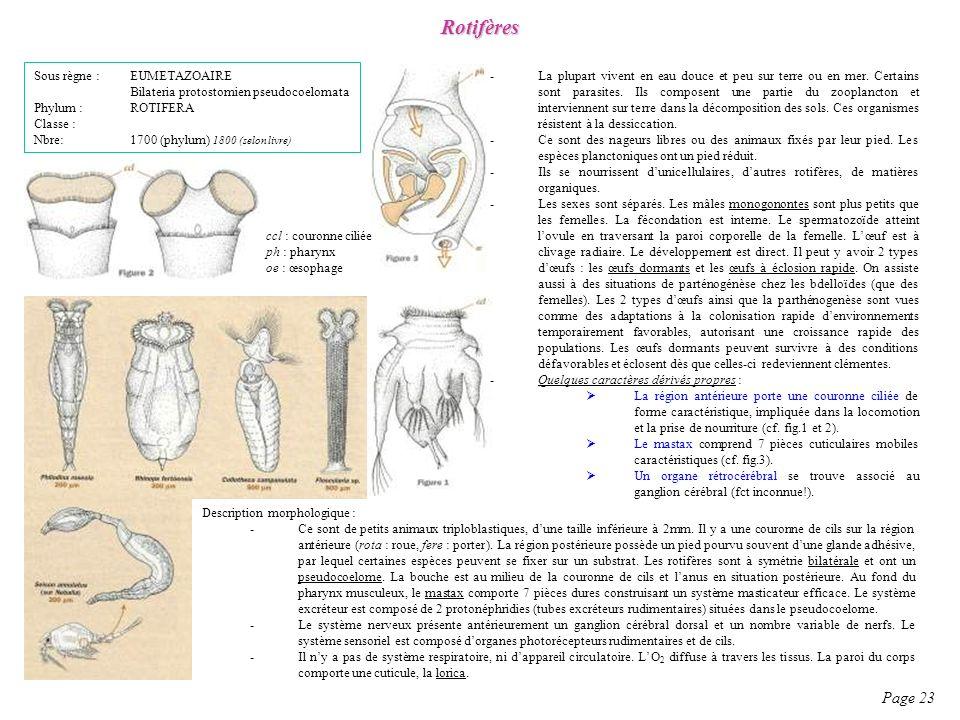 Rotifères Page 23 Sous règne : EUMETAZOAIRE