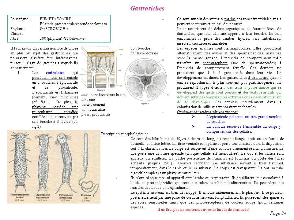 Gastroriches Page 24 Sous règne : EUMETAZOAIRE