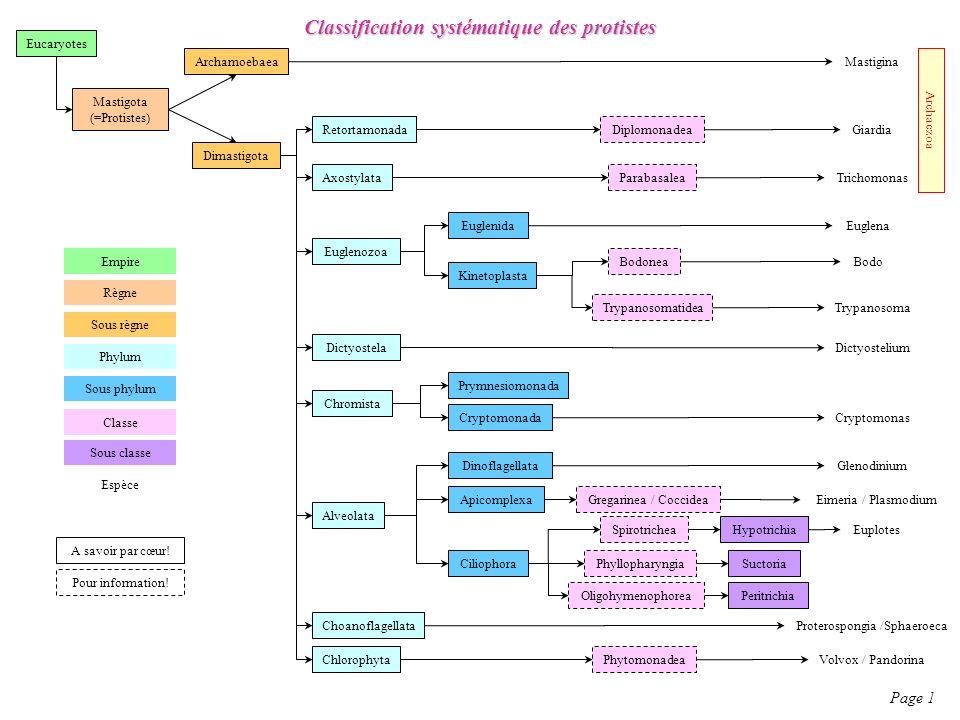 Classification systématique des protistes