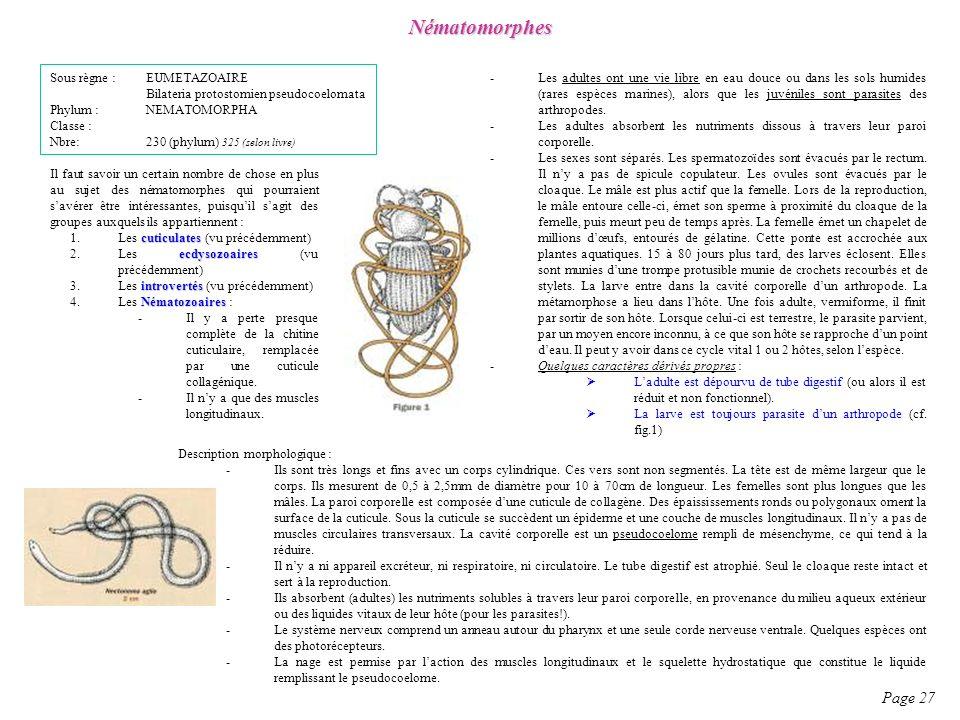 Nématomorphes Page 27 Sous règne : EUMETAZOAIRE