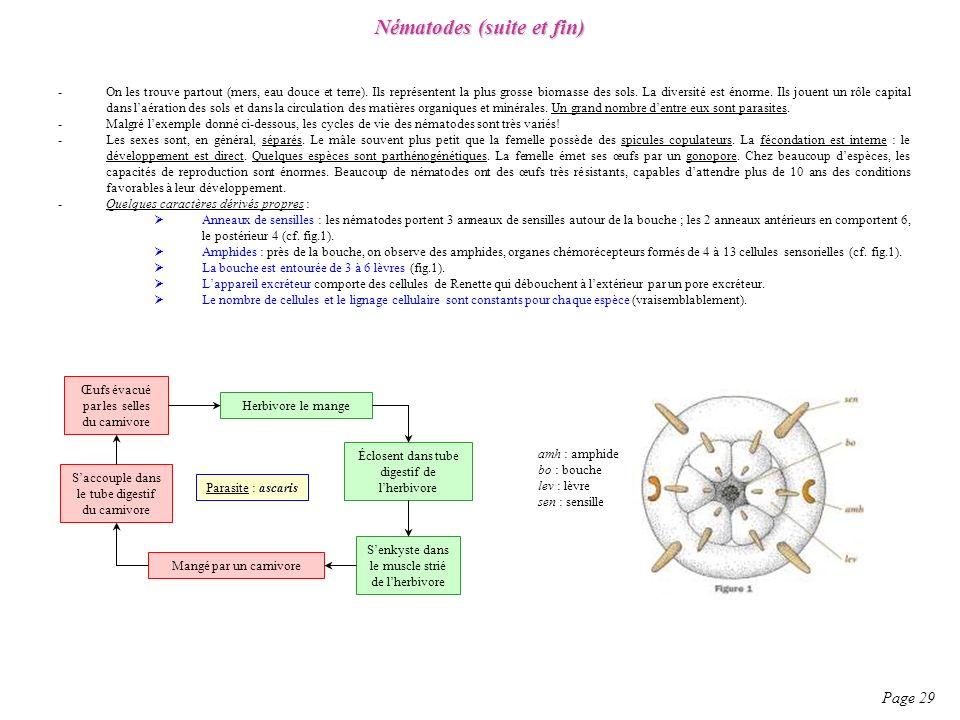 Nématodes (suite et fin)