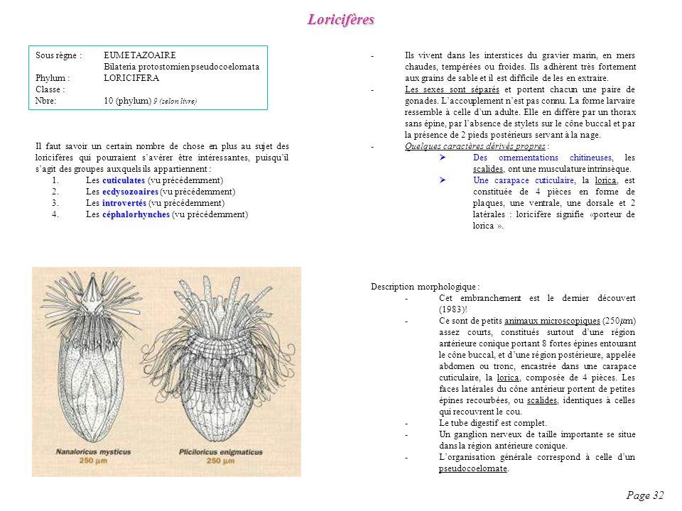 Loricifères Page 32 Sous règne : EUMETAZOAIRE