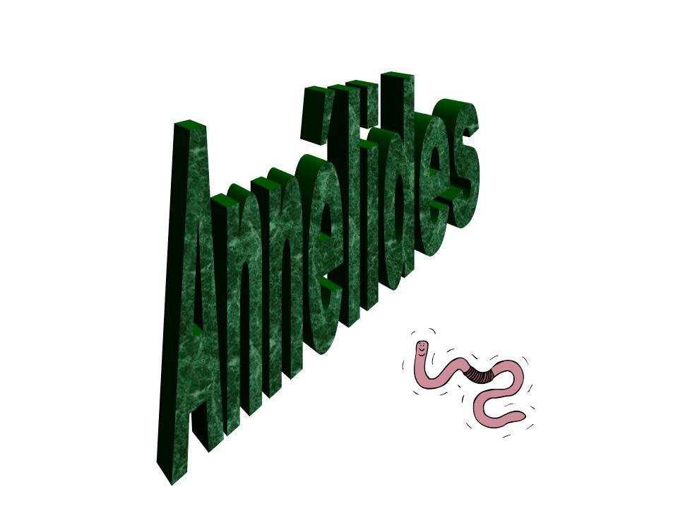 Annélides