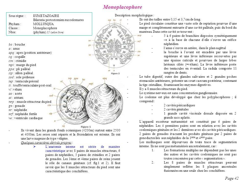 Monoplacophore Page 42 Sous règne : EUMETAZOAIRE