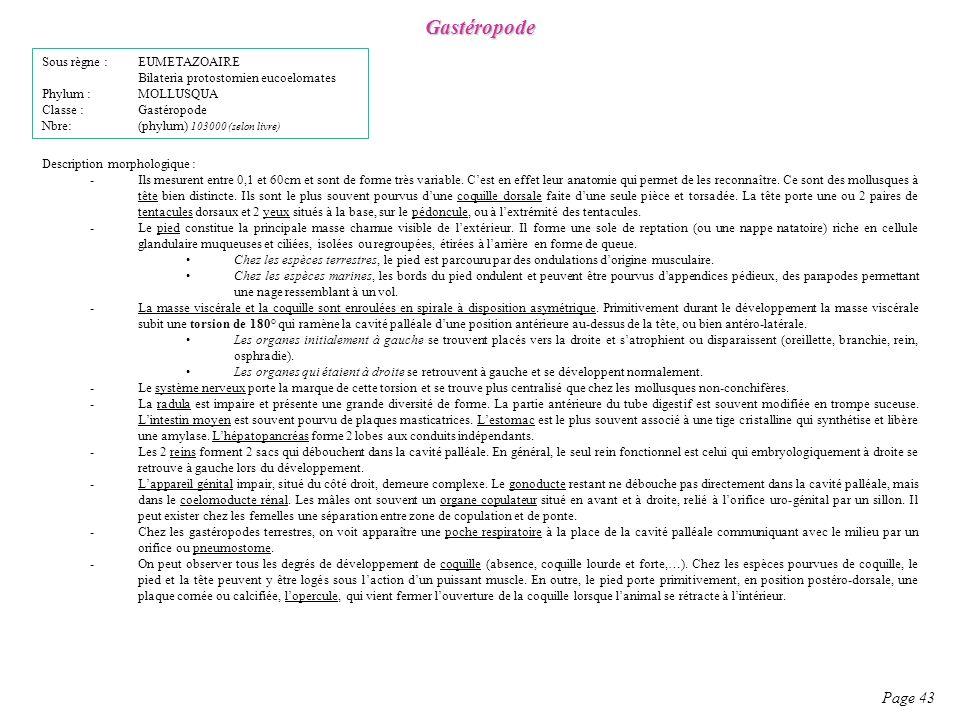 Gastéropode Page 43 Sous règne : EUMETAZOAIRE