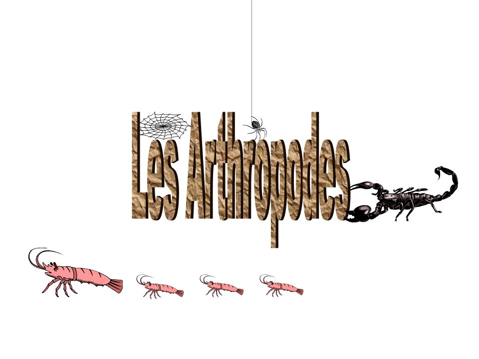 Les Arthropodes