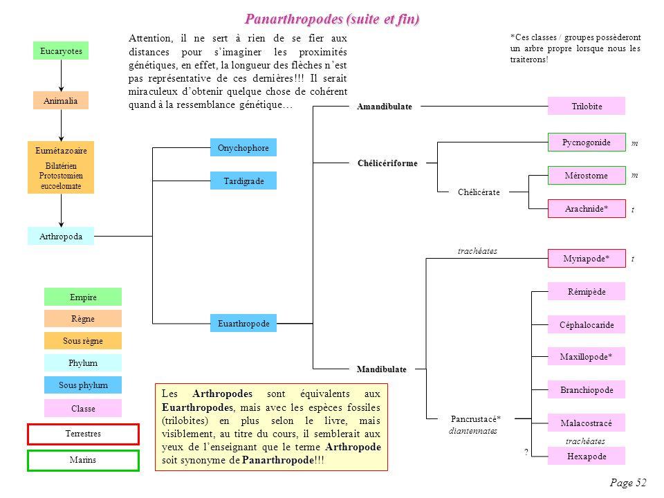 Panarthropodes (suite et fin)
