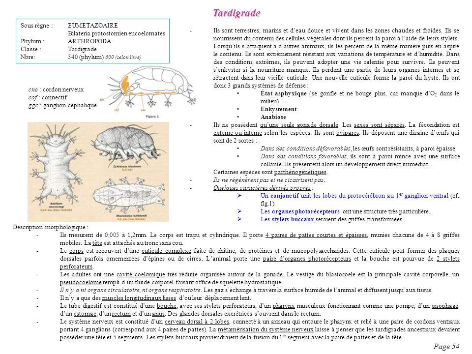 Tardigrade Page 54 Sous règne : EUMETAZOAIRE