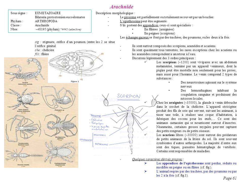 Arachnide Page 61 Sous règne : EUMETAZOAIRE