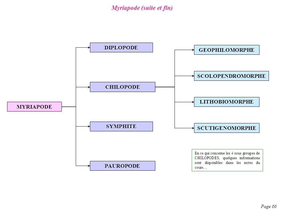 Myriapode (suite et fin)