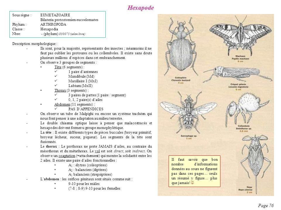 Hexapode Page 76 Sous règne : EUMETAZOAIRE