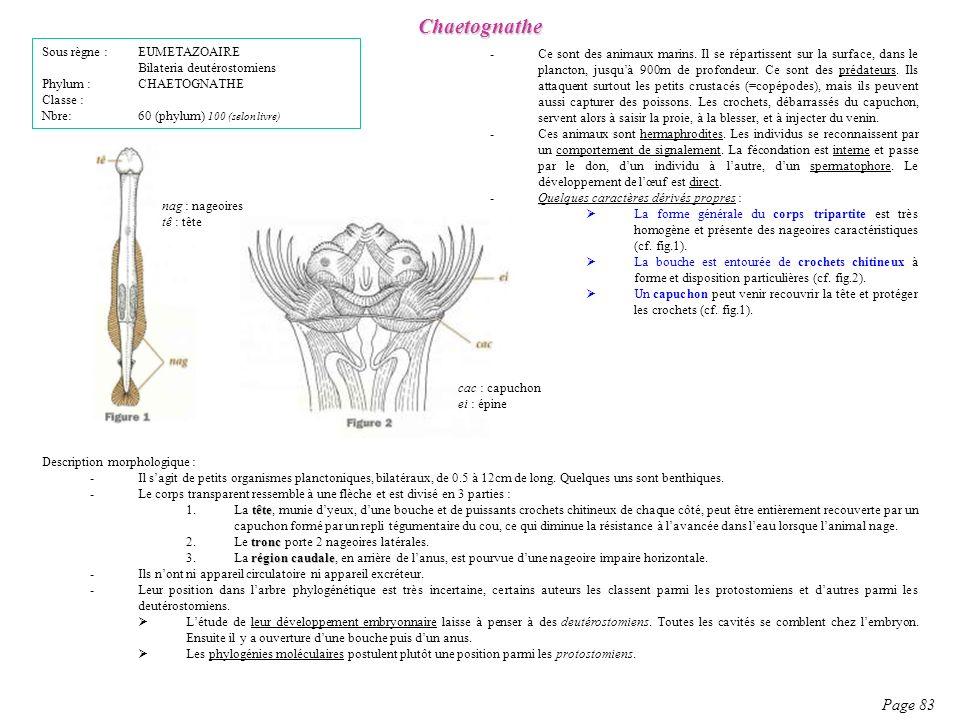 Chaetognathe Page 83 Sous règne : EUMETAZOAIRE