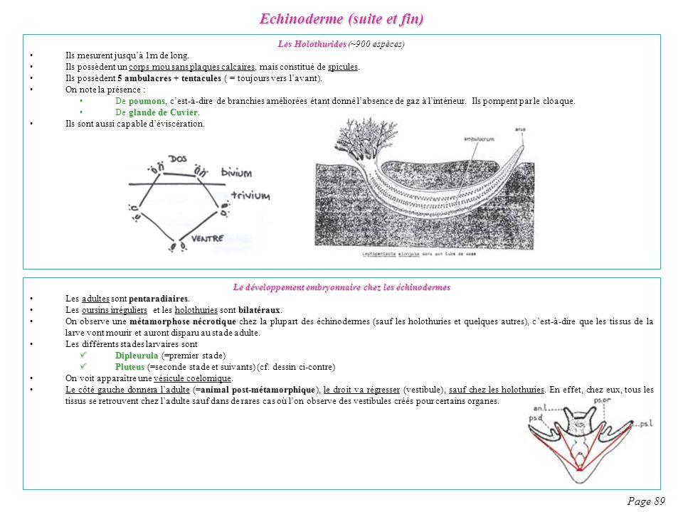 Echinoderme (suite et fin)