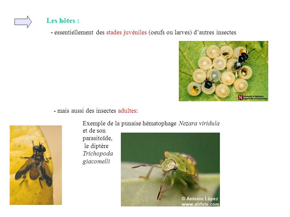 Les hôtes : - essentiellement des stades juvéniles (oeufs ou larves) d'autres insectes. - mais aussi des insectes adultes: