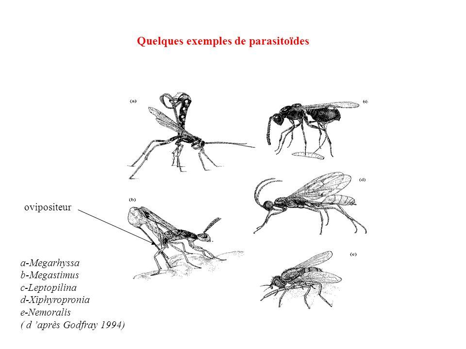 Quelques exemples de parasitoïdes