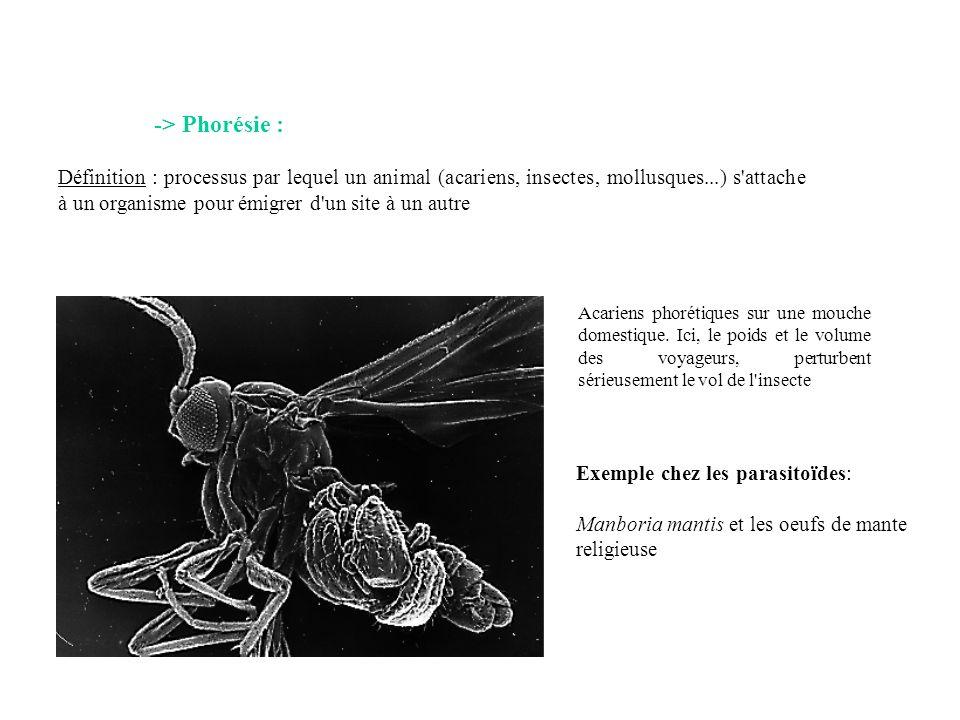 -> Phorésie :
