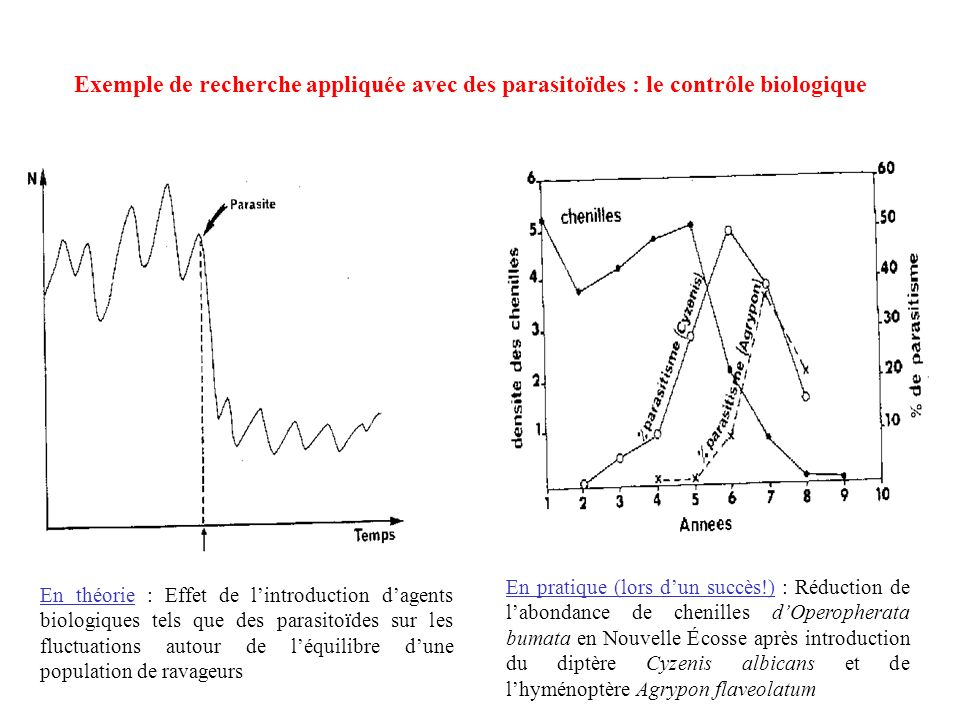 Exemple de recherche appliquée avec des parasitoïdes : le contrôle biologique
