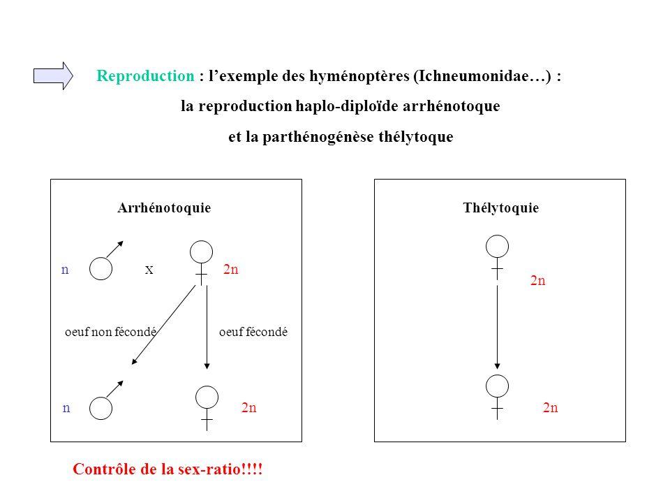 Reproduction : l'exemple des hyménoptères (Ichneumonidae…) :