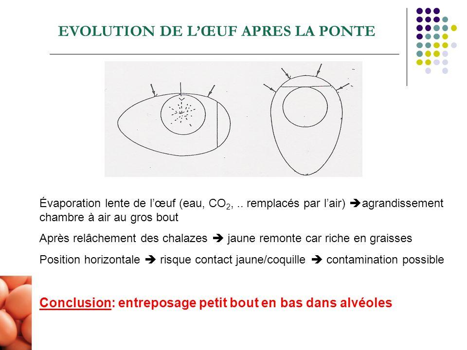 EVOLUTION DE L'ŒUF APRES LA PONTE