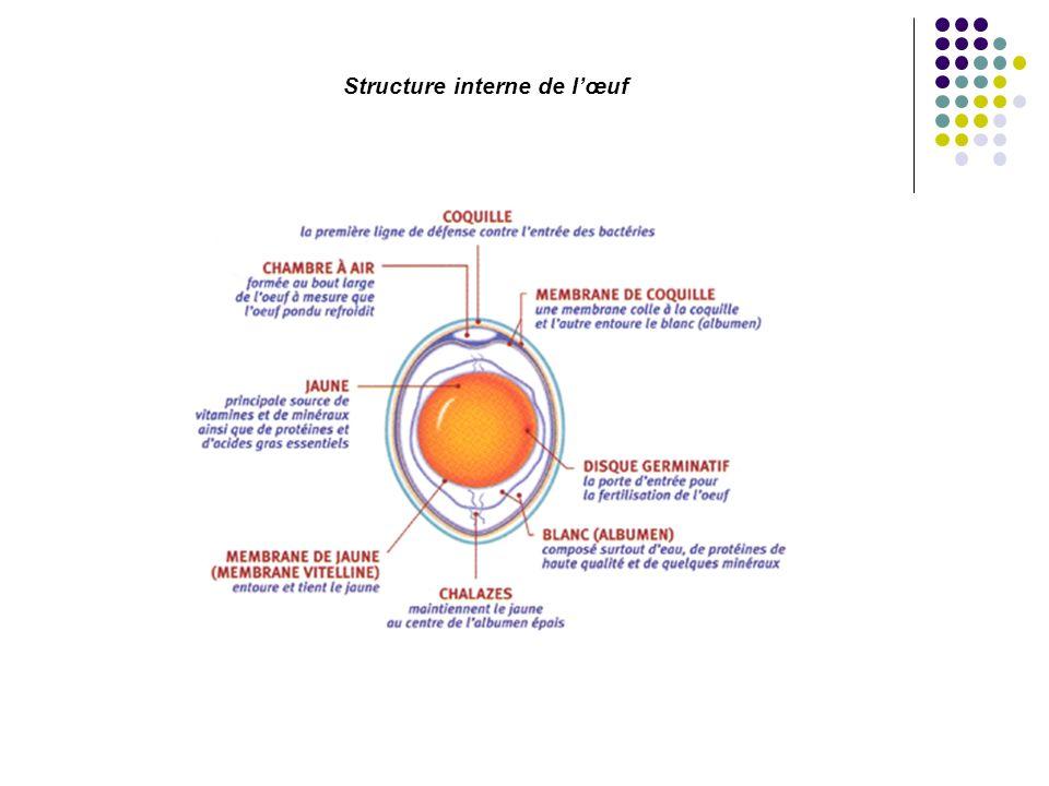 Structure interne de l'œuf