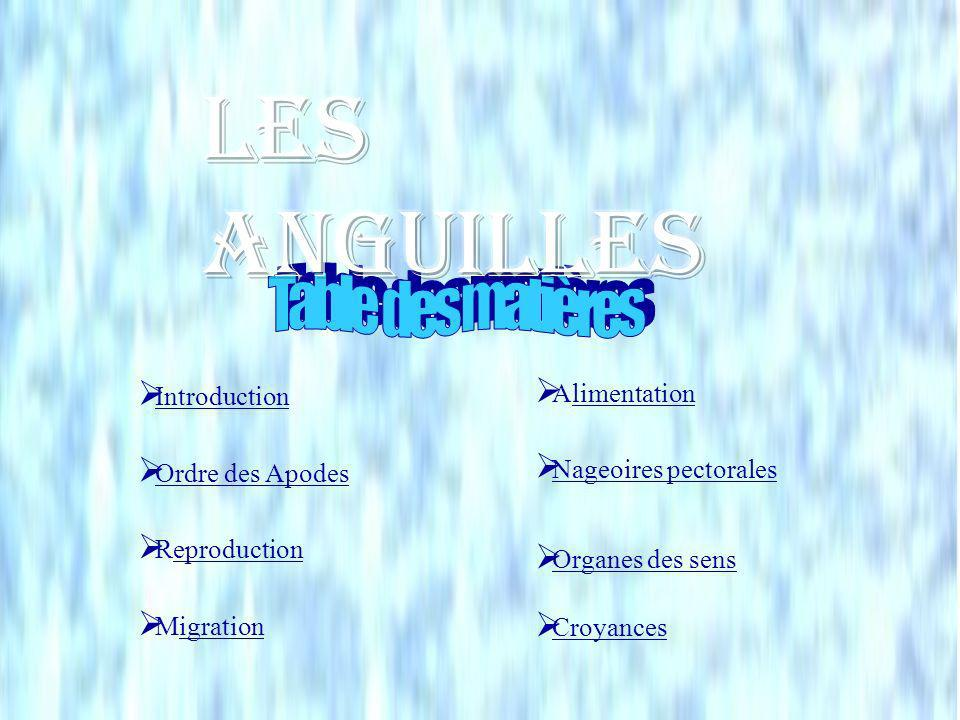 Les Anguilles Table des matières Alimentation Introduction