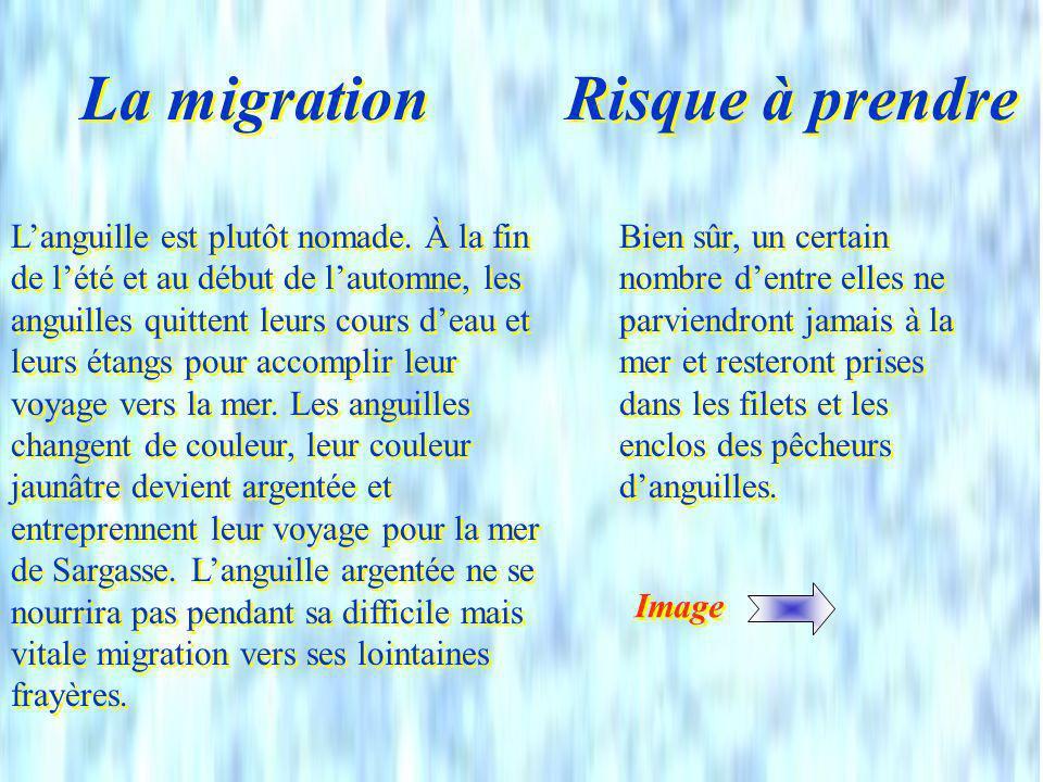 La migration Risque à prendre