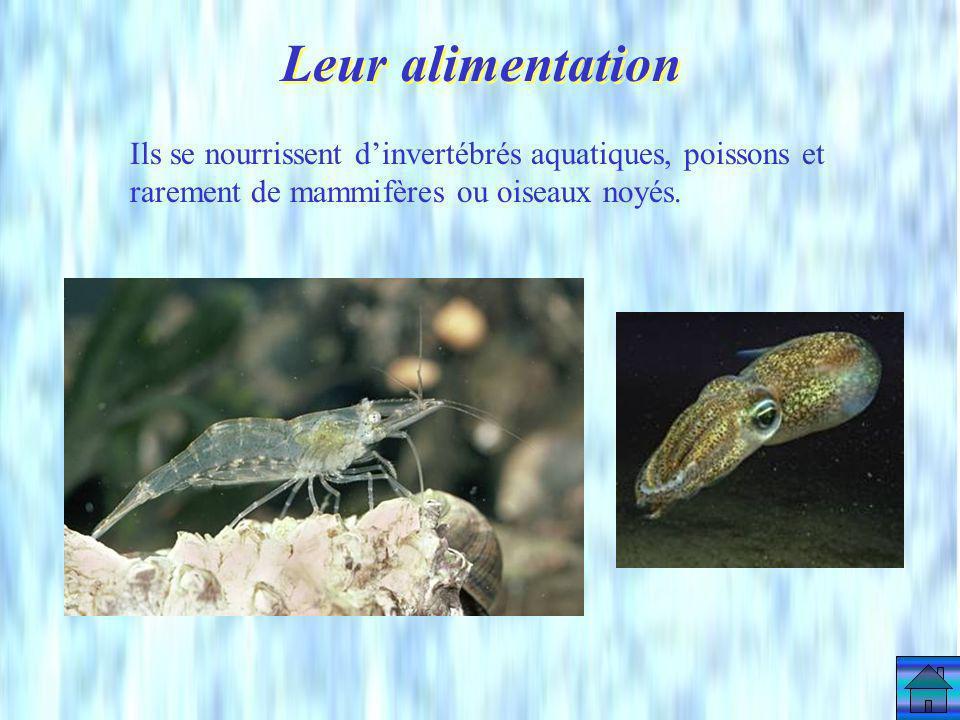 Leur alimentation Ils se nourrissent d'invertébrés aquatiques, poissons et rarement de mammifères ou oiseaux noyés.
