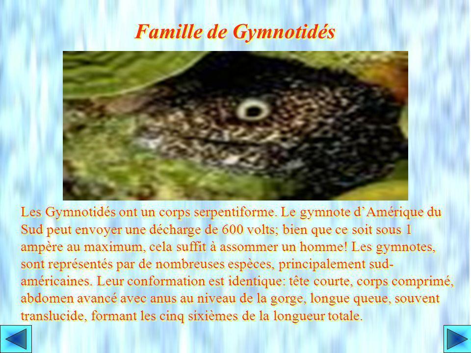 Famille de Gymnotidés