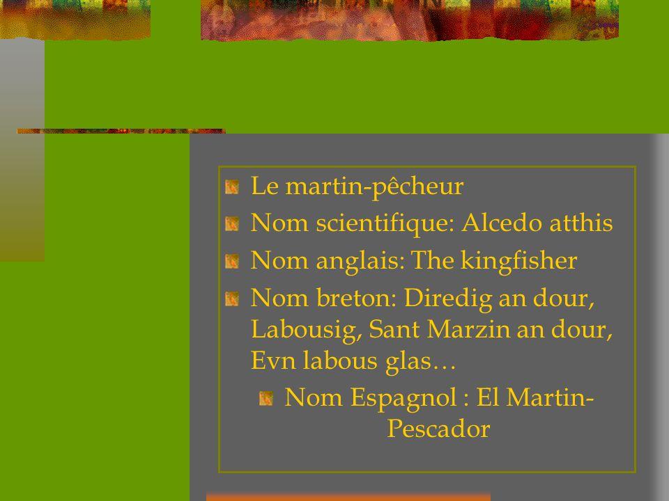Nom Espagnol : El Martin-Pescador