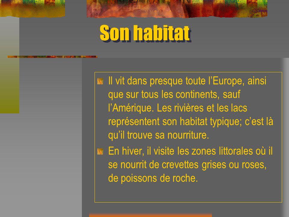 Son habitat