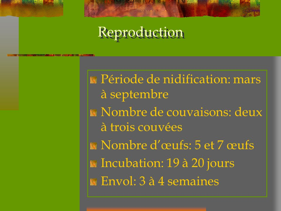 Reproduction Période de nidification: mars à septembre