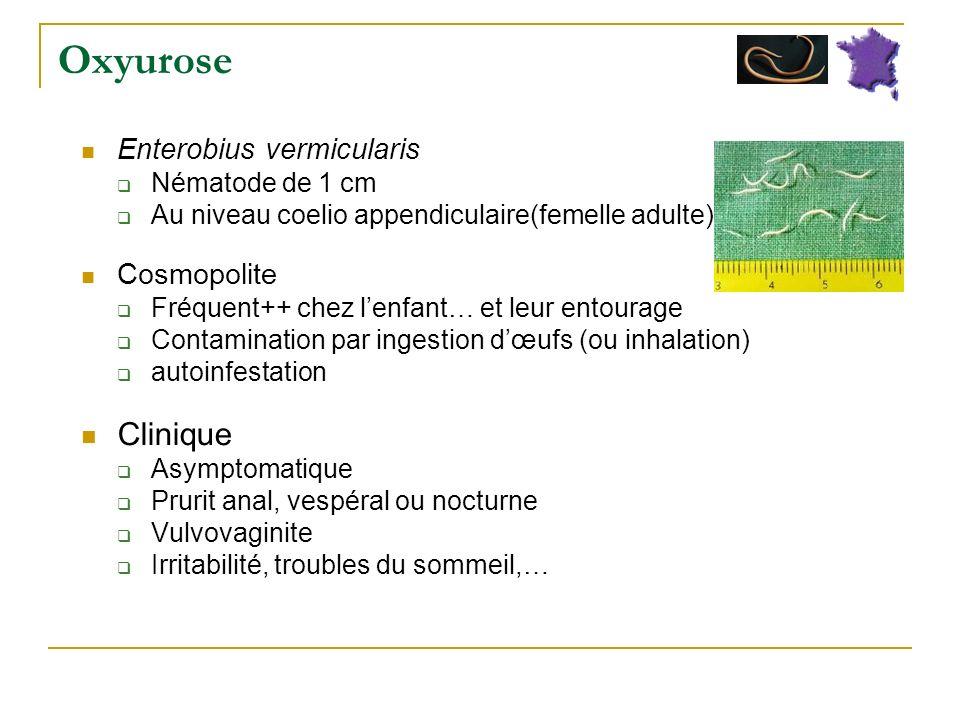Oxyurose Clinique Enterobius vermicularis Cosmopolite Nématode de 1 cm