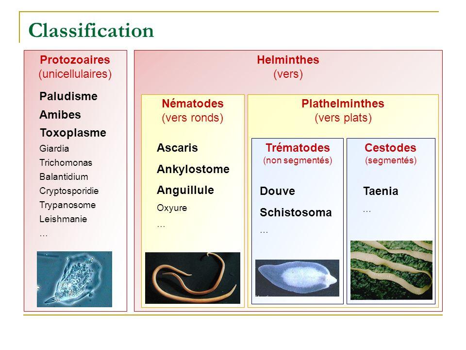 Classification Protozoaires (unicellulaires) Helminthes (vers)