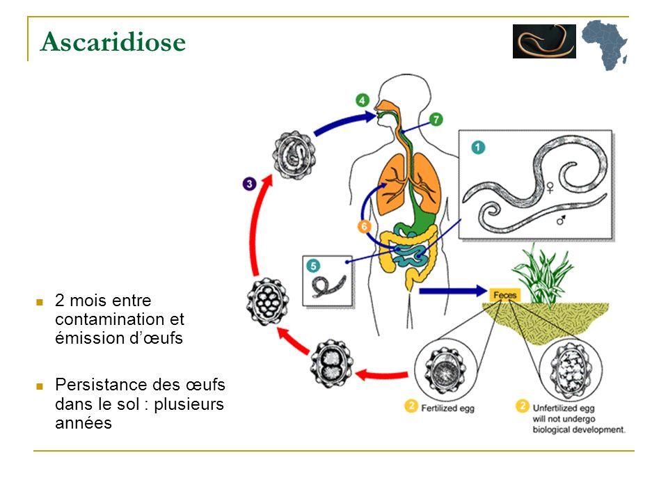 Ascaridiose 2 mois entre contamination et émission d'œufs