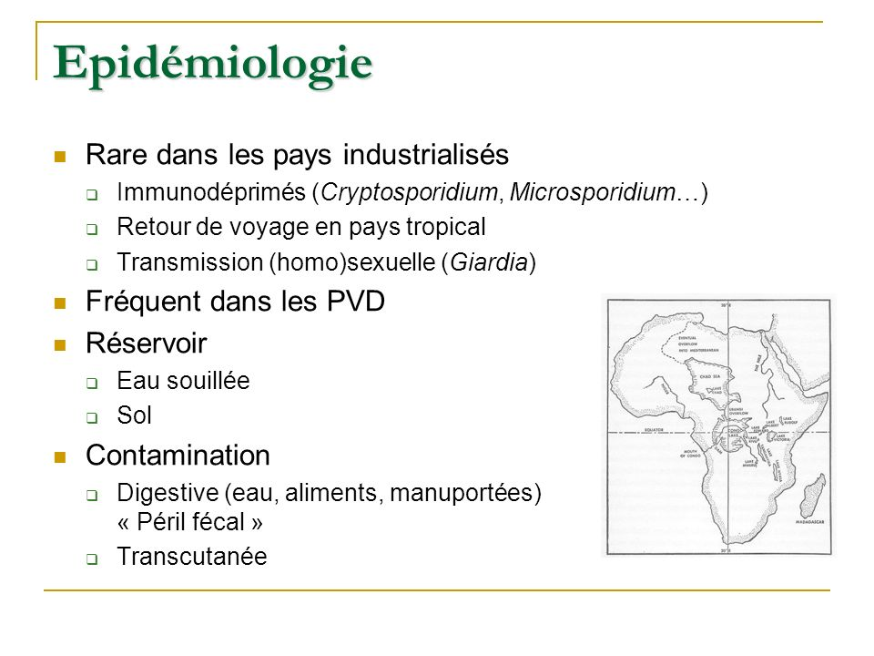 Epidémiologie Rare dans les pays industrialisés Fréquent dans les PVD