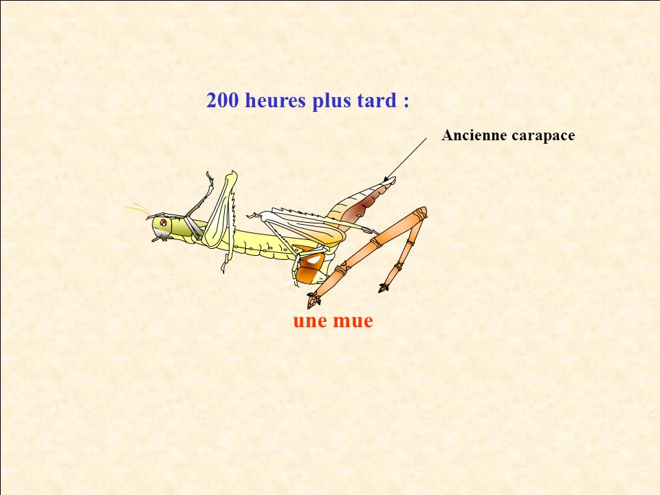 200 heures plus tard : Ancienne carapace une mue