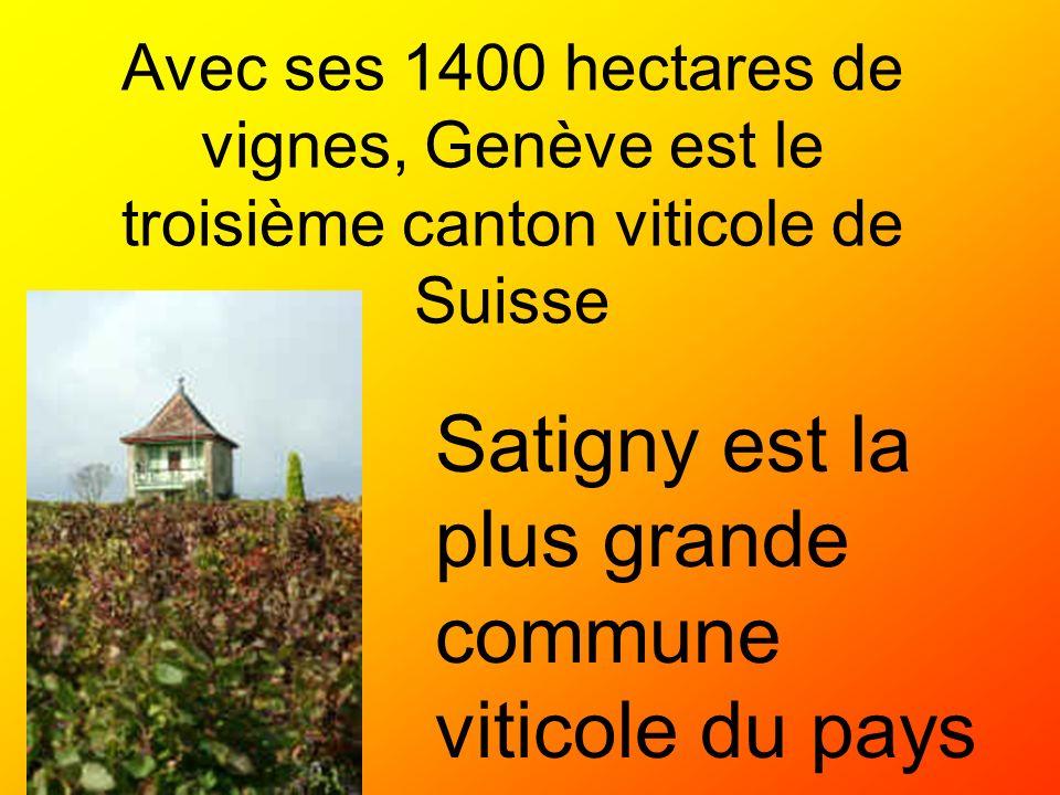 Satigny est la plus grande commune viticole du pays