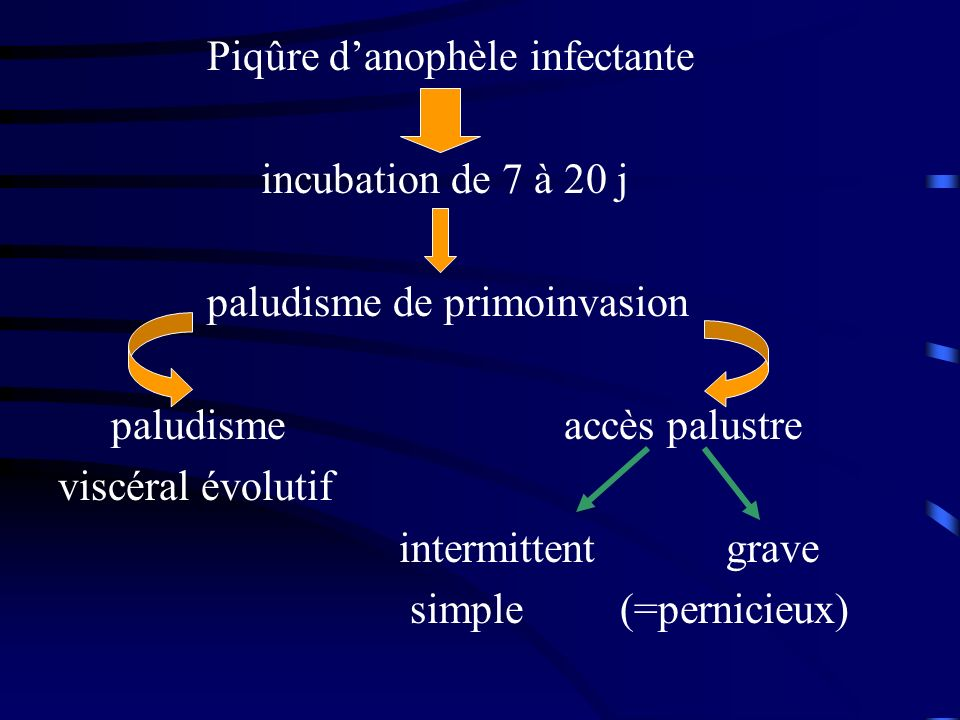 Piqûre d'anophèle infectante